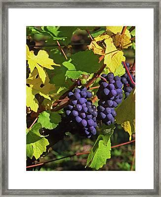 Usa, Oregon, Willamette Valley Framed Print by Jaynes Gallery