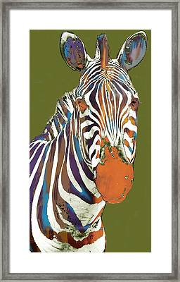 Zebra - Stylised Drawing Art Poster Framed Print by Kim Wang