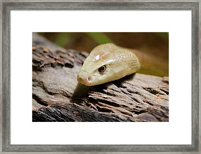 Australia, Northern Territory, Darwin Framed Print by Cindy Miller Hopkins
