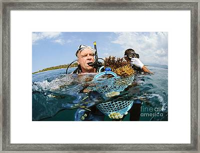 Biorock Reef Restoration, Indonesia Framed Print by Matthew Oldfield