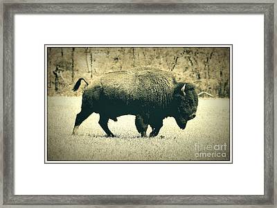 Buffalo  Framed Print by Mickey Harkins