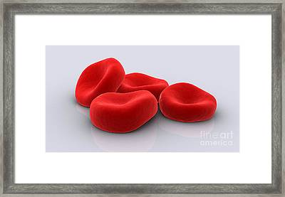Conceptual Image Of Red Blood Cells Framed Print by Stocktrek Images