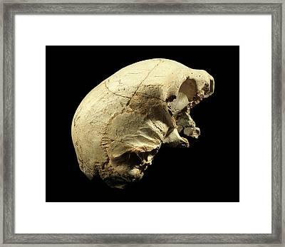 Hominin Skull From Sima De Los Huesos Framed Print by Javier Trueba/msf
