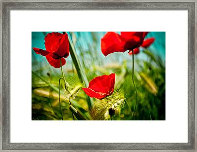 Poppy Field And Sky Framed Print by Raimond Klavins