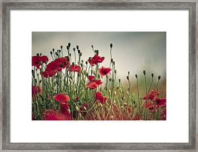 Poppy Meadow Framed Print by Nailia Schwarz