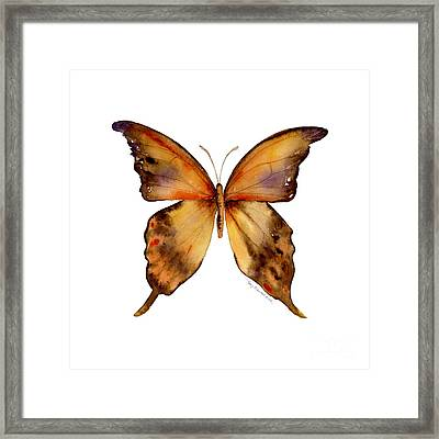 7 Yellow Gorgon Butterfly Framed Print by Amy Kirkpatrick