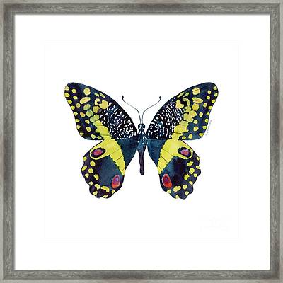73 Citrus Butterfly Framed Print by Amy Kirkpatrick