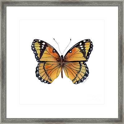 76 Viceroy Butterfly Framed Print by Amy Kirkpatrick