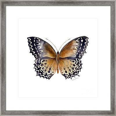 77 Cethosia Butterfly Framed Print by Amy Kirkpatrick