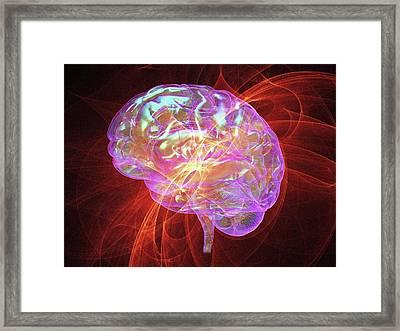 Human Brain Framed Print by Alfred Pasieka