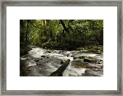 Jungle Stream Framed Print by Les Cunliffe