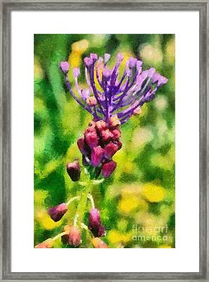 Spring Wild Flower Framed Print by George Atsametakis