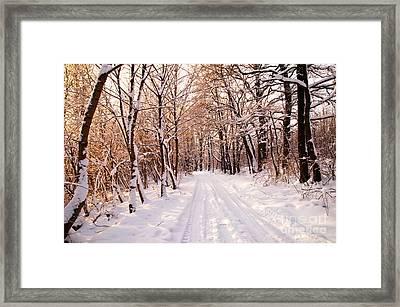 Winter White Forest Framed Print by Michal Bednarek