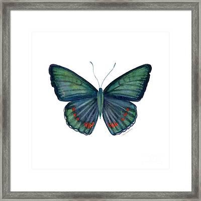 82 Bellona Butterfly Framed Print by Amy Kirkpatrick