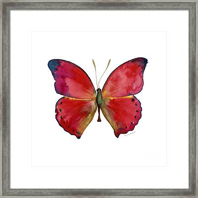 83 Red Glider Butterfly Framed Print by Amy Kirkpatrick