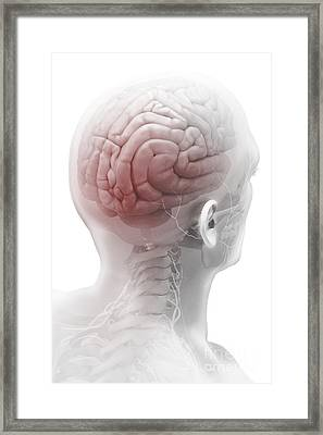 Human Brain Framed Print by Science Picture Co