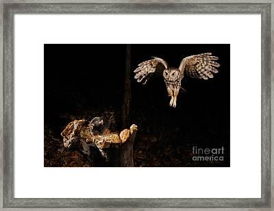 Eastern Screech Owl Framed Print by Scott Linstead