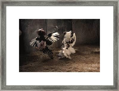 La Lidia Framed Print by Jose Angel Shiuk