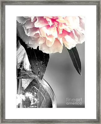 Peony Framed Print by France Laliberte