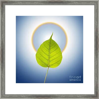 Pho Or Bodhi Framed Print by Atiketta Sangasaeng