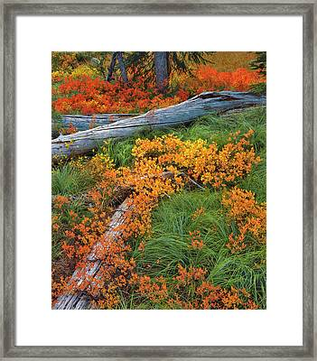 Usa, Oregon, Willamette National Forest Framed Print by Jaynes Gallery