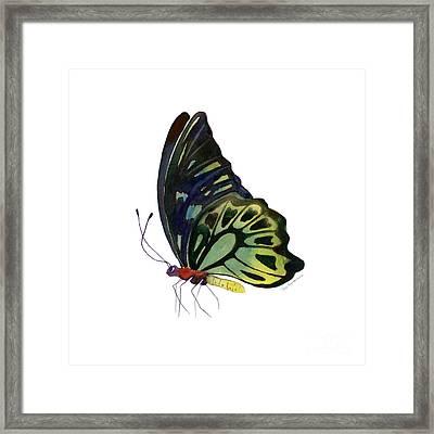 97 Perched Kuranda Butterfly Framed Print by Amy Kirkpatrick