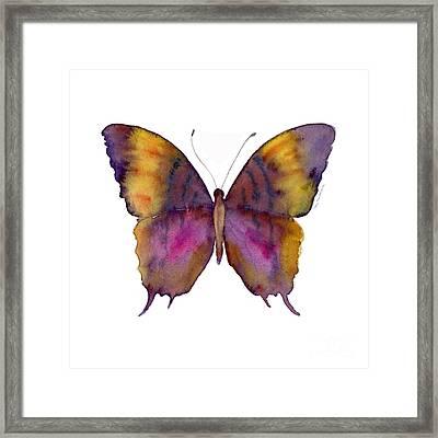 99 Marcella Daggerwing Butterfly Framed Print by Amy Kirkpatrick