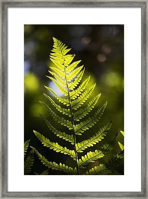 A Backlit Fern Frond  Northumberland Framed Print by John Short