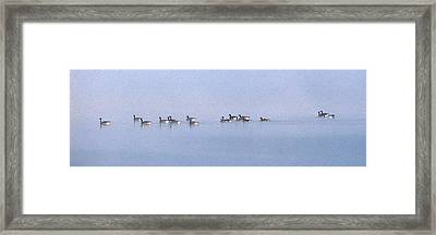 A Band Of Geese Framed Print by Skip Willits