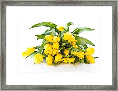 A Beautiful Yellow Tulips Framed Print by Boon Mee