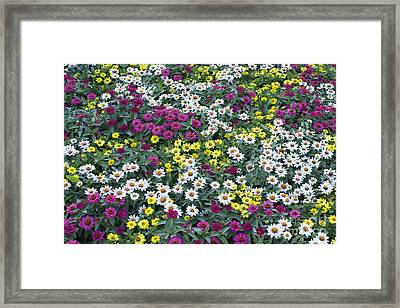 A Bed Of Color  Framed Print by Tim Gainey