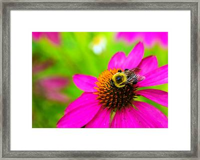 A Bee And Reverie Framed Print by Jon Woodhams