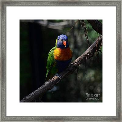 A Bird Of Many Colors 2 Framed Print by Mel Steinhauer