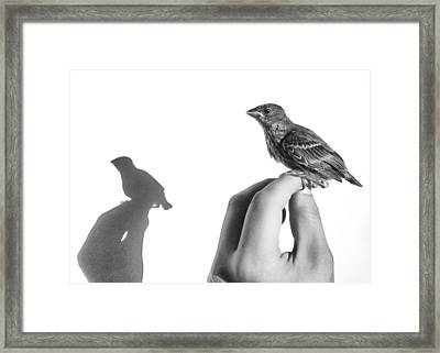 A Bird On The Hand Framed Print by Caitlyn  Grasso