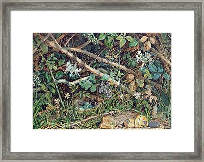 A Birds Nest Among Brambles Framed Print by John Sherrin
