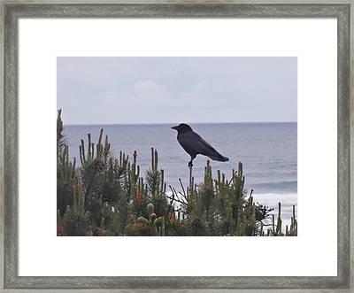 A Bird's Watch  Framed Print by Lizbeth Bostrom