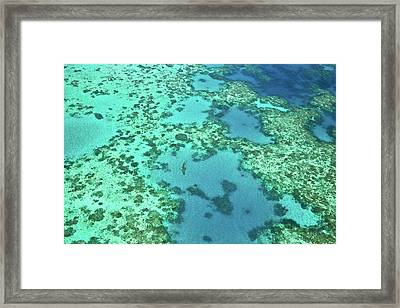 A Blacktip Reef Shark (carcharhinus Framed Print by Miva Stock