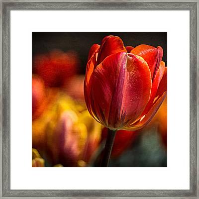 A Blaze Of Color Framed Print by Jon Woodhams