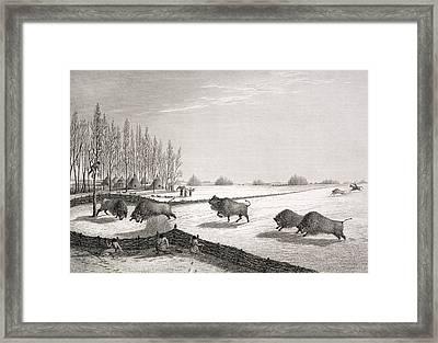 A Buffalo Pound Framed Print by George Back