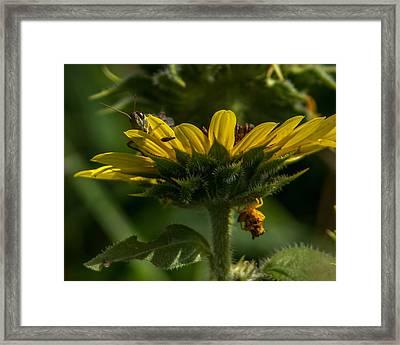 A Bugs World Framed Print by Ernie Echols