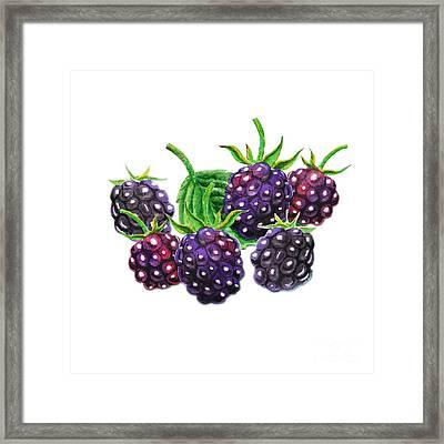 A Bunch Of Blackberries Framed Print by Irina Sztukowski