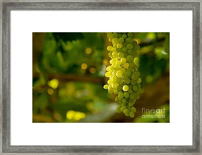 A Bunch Of White Grapes  Framed Print by Leyla Ismet