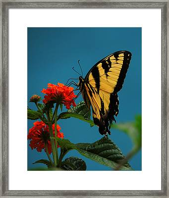A Butterfly Framed Print by Raymond Salani III