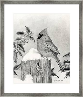 A Cardinal And Holly Framed Print by Sarah Batalka