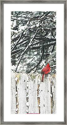 A Christmas Cardinal Framed Print by PainterArtist FIN