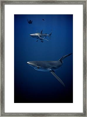 A Close Encounter Framed Print by Simon Sundelin