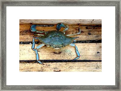 A Crab In A Wooden Box Framed Print by Olga R