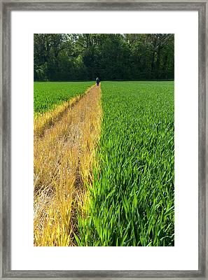 A Cross-field Public Footpath Framed Print by Dr Jeremy Burgess