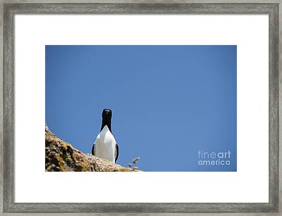A Curious Bird Framed Print by Anne Gilbert