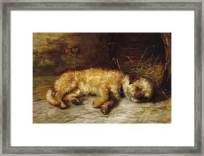 A Dandie Dinmont Framed Print by Philip Eustace Stretton